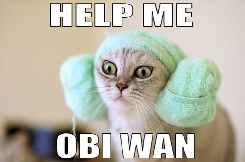 Expert SQL Server - Mode de secours SQL Server (DAC) - SQL Server  - funny-princess-leah-cat-help-me-obi-wan-pics1