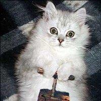Expert SQL Server - Erreur : Transaction log for database 'xxx' is full due to 'ACTIVE_TRANSACTION' - SQL Server  - dynamite_kitty
