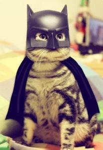 Expert SQL Server - Etude des contextes en DAX (2/4) : Contexte de filtre - BI & Big Data  - cat-batman-halloween-costume-206x300